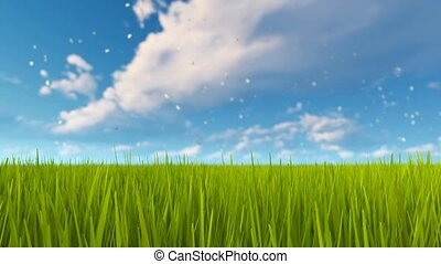 Green grass and cloudy sky natural background 4K - Spring...