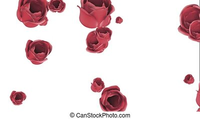 Falling red roses on a white background