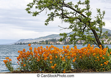 Flowers and a tree at the edge of Lake Geneva