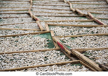 Anchovies drying for fish sauce production in Mui Ne,...