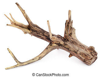 Driftwood over white background