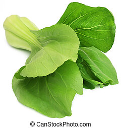 Organic Bok Choy over white background