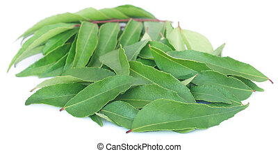 Curry Leaves piled over white background