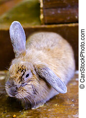 pet rabbit red rodent small suit - mage pet rabbit red...