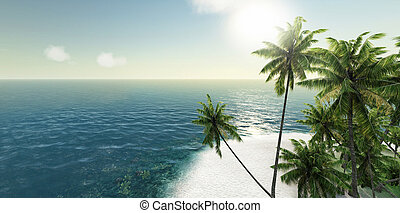 sea, tropical island, palm , sun