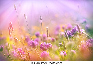 Meadow flowers - red clover lit by sun rays