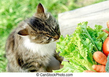 Pet - cat knows what is healthy food (organic vegetables)