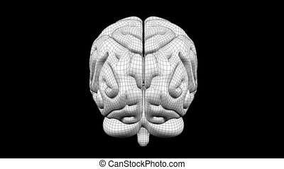 Brain Wireframe White 09 - Loopable abstract brain animation...