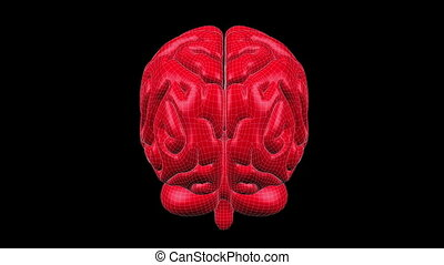 Brain Wireframe Red 15 - Loopable abstract brain animation...