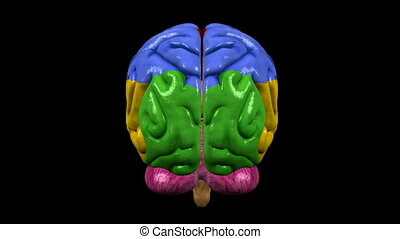 Brain with regions 03 - Loopable abstract brain animation....