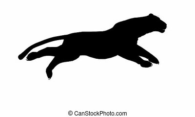 Looping JaguarpantherLeopardpuma Animation with silhouette...