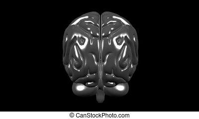 Brain gray 05