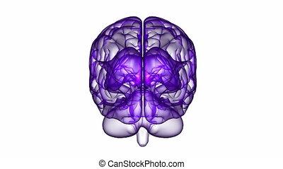 Brain XRay Purple 12 - Loopable abstract brain animation....