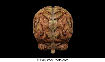 Photo-realistic unhealty brain - Loopable abstract brain...