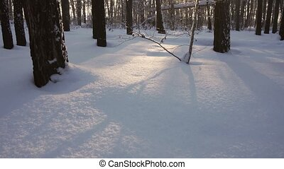 Vertical panorama of sun streaming through winter forest...