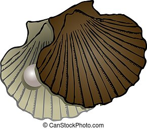 Pearl Mussel shells - Open sash clam with a pearl. Vector...