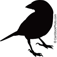 a sparrow silhouette