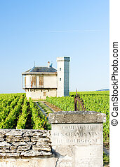 vineyards of Clos Blanc De Vougeot Castle, Burgundy, France