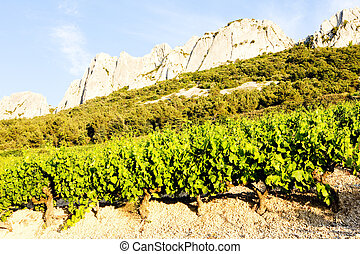 vineyards near Gigondas Provence, France - vineyards near...