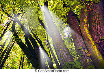 Shafts of lights piercing through dense canopy
