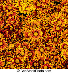 Orange flowers floor