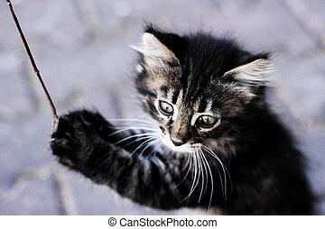 kitten, kitten playing, kitten standing on hind legs, a...