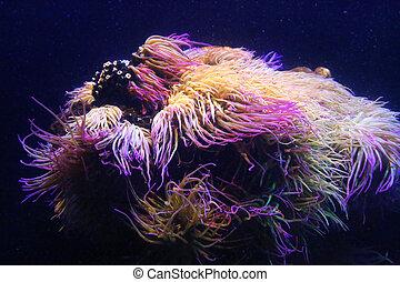Amazing marine animals (anemonia, actinia, anemone) -...