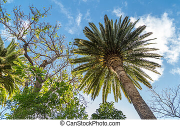 Palmtree and nature on tenerife on a beautiful day