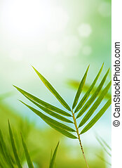 Bamboo leaves - Close up bamboo leaves with copy space on...