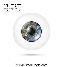 Eye Realistic. Vector Illustration Of 3d Human Glossy Photo Rrealistic Eye With Shadow And Reflection. Front View. Isolated On White Background