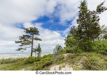 Sand Dune With Pine Trees Next to Lake Huron - Sand dune...