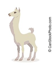 Llama Isolated on White. South American Camelid - Llama...