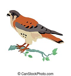 American Kestrel Flat Design Vector Illustration - American...