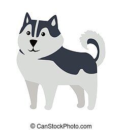 Siberian Husky Medium Size Dog Breed Isolated - Siberian...