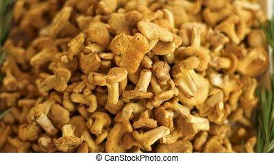 Close-up of chanterelles pile. Small yellow mushrooms.