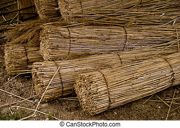 reed - detail of reed for thatched roofs