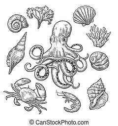 Set sea shell, coral, crab, shrimp and octopus. Vector black...
