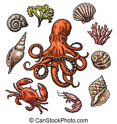 Set sea shell, coral, crab, shrimp and octopus. Vector color...