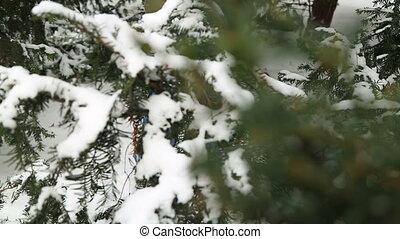 Winter portrait of kid boy having fun with snow
