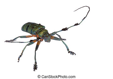 Longhorn Beetle - Macro image of a Longhorn Beetle, known...