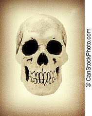Human skull close up image