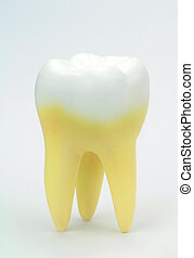 Tooth on white background