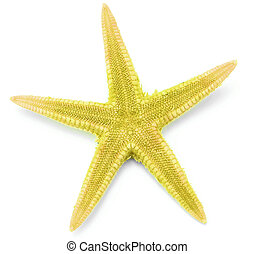 Yellow seastar, isolated on white background.