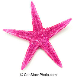 Pink seastar, isolated on white background.
