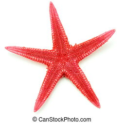 Red seastar, isolated on white background.