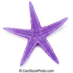 Purple seastar, isolated on white background.
