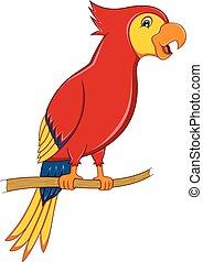 Funny parrots cartoon
