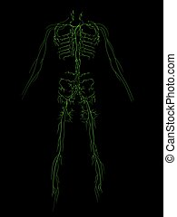 lymphatic system - 3d rendered illustration of human...