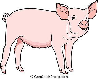 pig - The pink piggy on a white background.