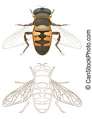 honey bee - vector honey bee
